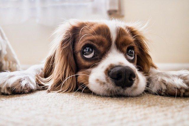 Le più comuni parassitosi intestinali nel cane