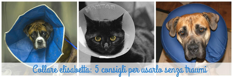 Collare elisabetta: 5 consigli per usarlo senza traumi