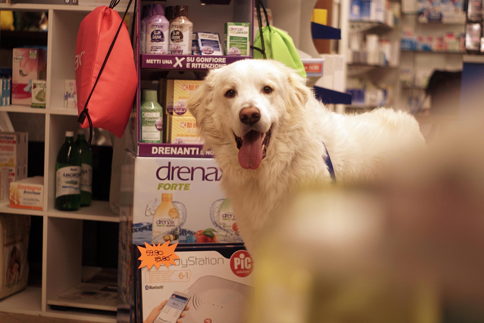 Cosa possiamo fare Per i Tuoi Animali - Medicinali