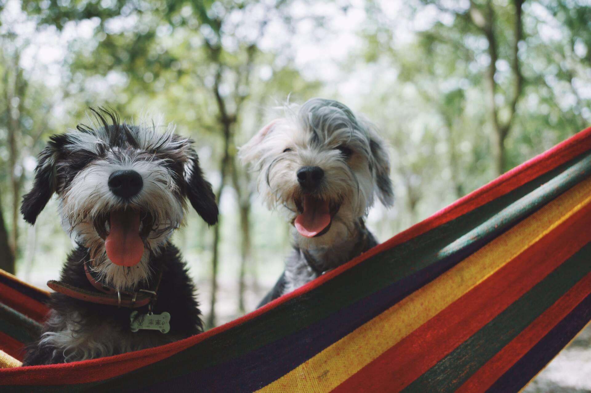Integratori per cani: quali e quando?