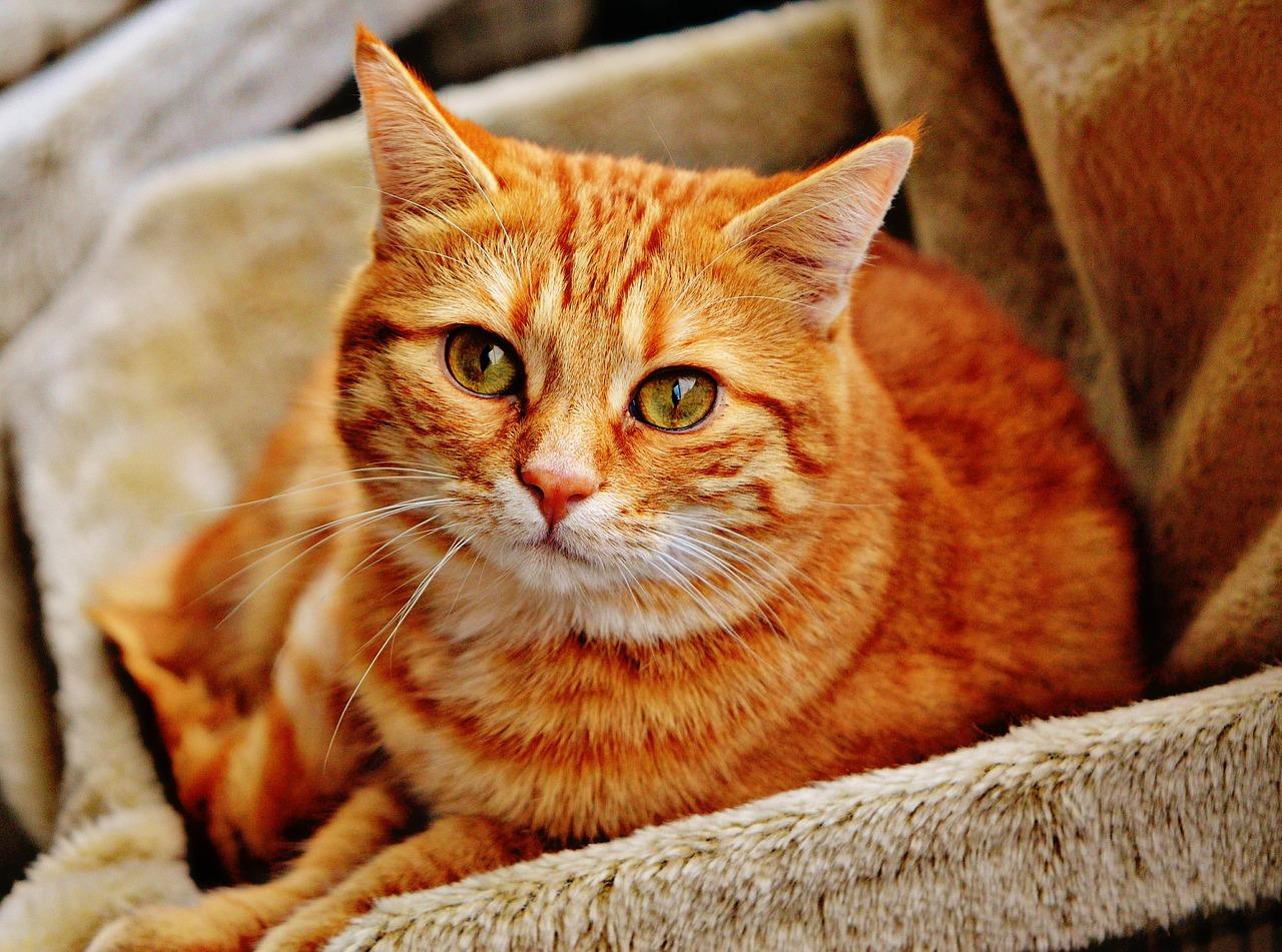 Insufficienza renale cronica felina: le 3 cose essenziali da sapere