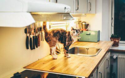 Non permettere che il tuo cane e il tuo gatto mangino questi alimenti!